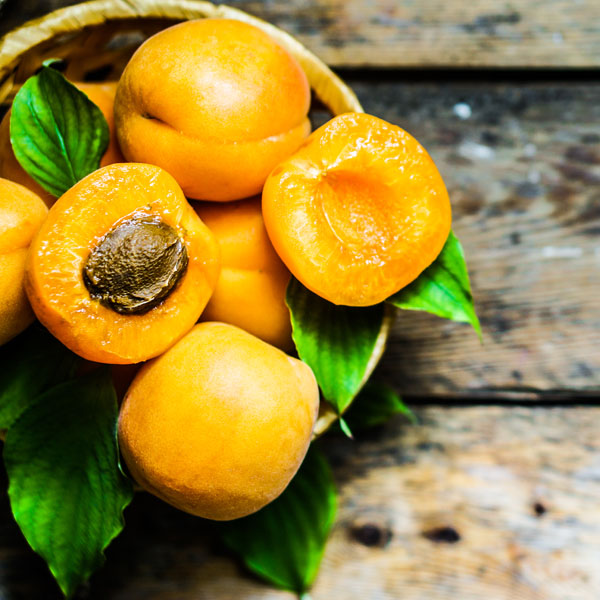 Casino apricot tree for sale