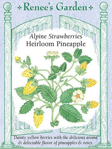 Alpine Strawberries Heirloom Pineapple Pack