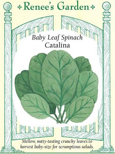 Baby Leaf Spinach Catalina pack