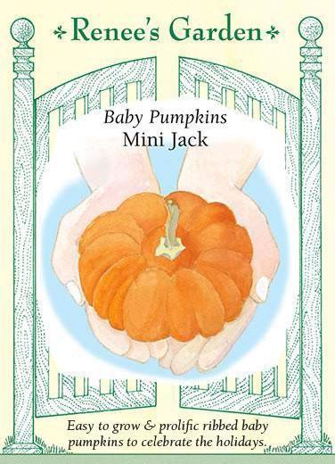Baby Pumpkins Mini Jack pack