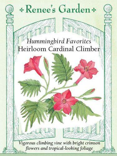 Hummingbird Favorites Heirloom Cardinal climber
