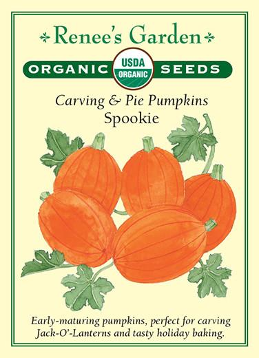Carving and Pie Pumpkins Spookie pack