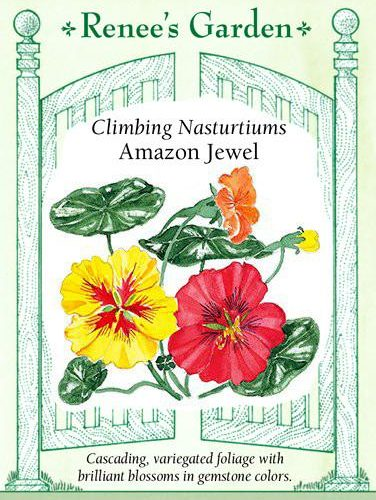 Climbing Nasturtiums Amazon Jewel pack