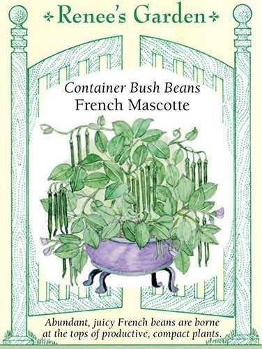 Container Bush Beans French Mascotte pack
