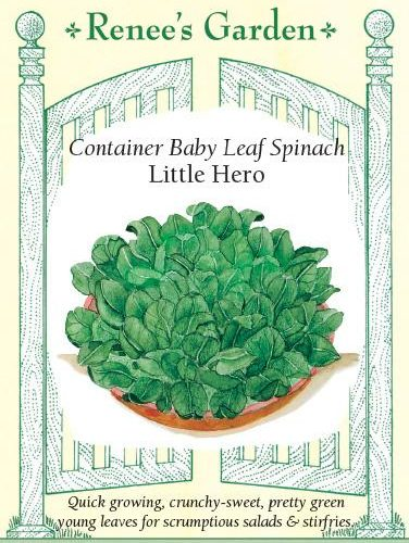 Container Baby Leaf Spinach Little Hero pack