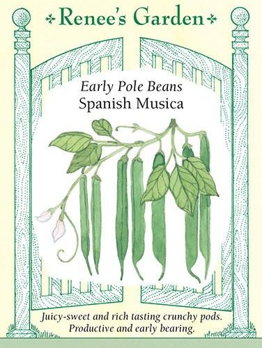 Early Pole Beans Spanish Musica pack