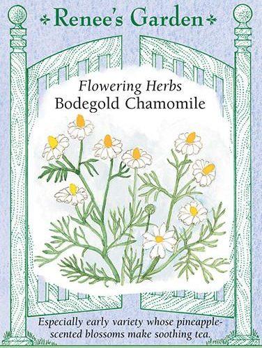 Flowering Herbs Bodegold Chamomile Pack