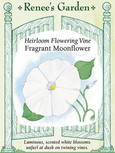Heirloom Flowering Vine Fragrant Moonflower pack