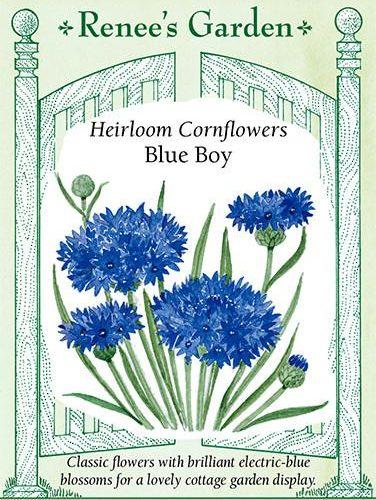 Heirloom Cornflowers Blue Boy pack