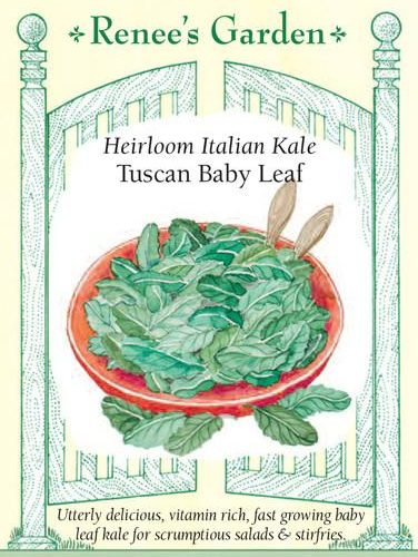 Heirloom Italian Kale Tuscan Baby Leaf pack