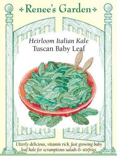 Heirloom Italian Kale Tuscan Baby Leaf pack