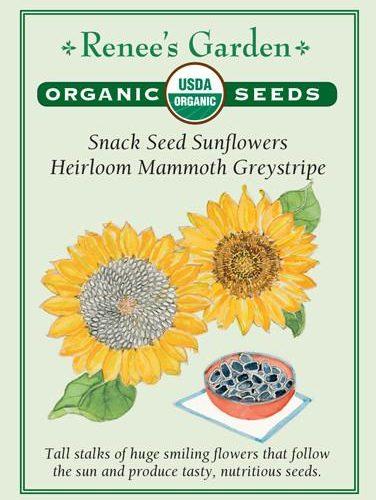 Snack Seed Sunflowers Heirloom Mammoth Greystripe Pack