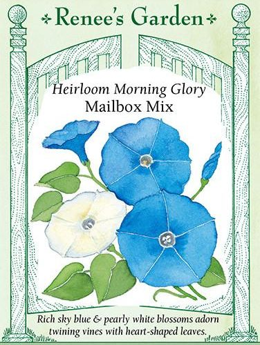 Heirloom Morning Glory Mailbox Mix pack