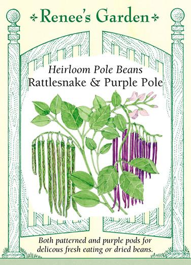 Heirloom Pole Beans Rattlesnake and Purple Pole pack