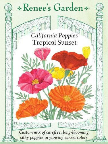 California Poppies Tropical sunset pack