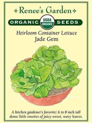 Heirloom Container Lettuce Jade Gem pack