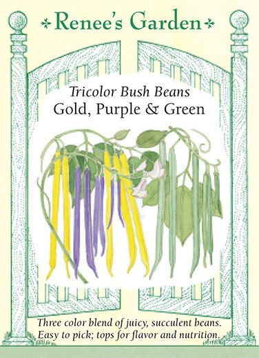 Tricolor Bush Beans Gold, Purple and Green pack