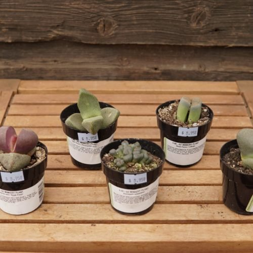 lithops overview