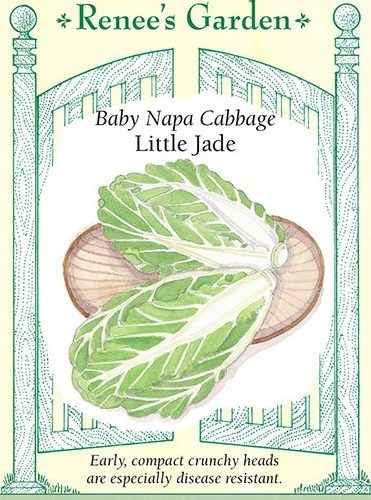 Baby Napa Cabbage Little Jade Pack