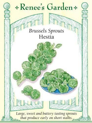 Brussels Sprouts Hestia Pack