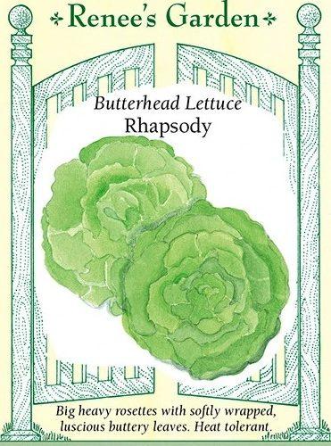 Butterhead Lettuce Rhapsody