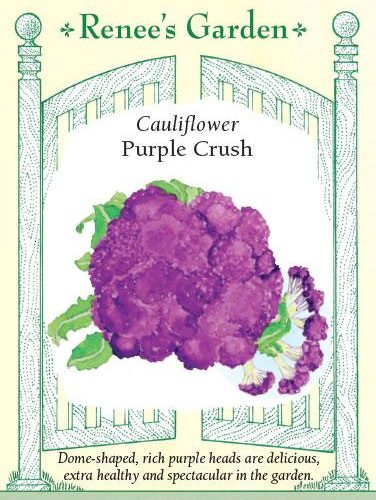 Cauliflower Purple Crush