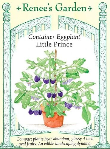 Container Eggplant Little Prince