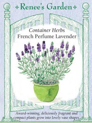 Container Herbs French Perfume Lavender
