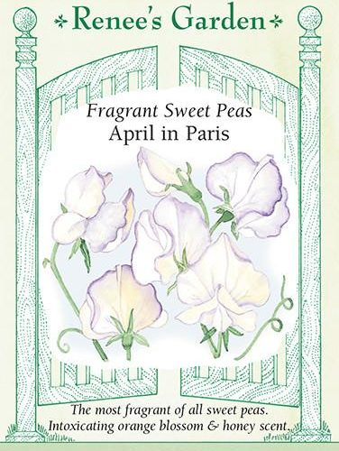 Fragrant Sweet Peas April in Paris