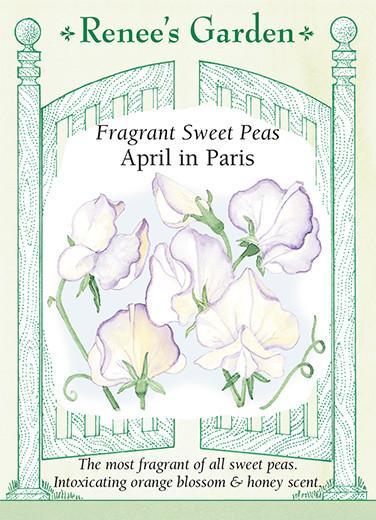 Fragrant Sweet Peas April in Paris