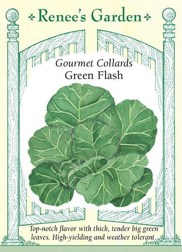Gourmet Collards Green Flash