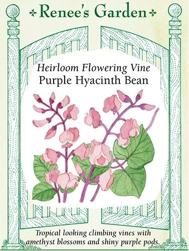 Heirloom Flowering Vine Purple Hyacinth Bean