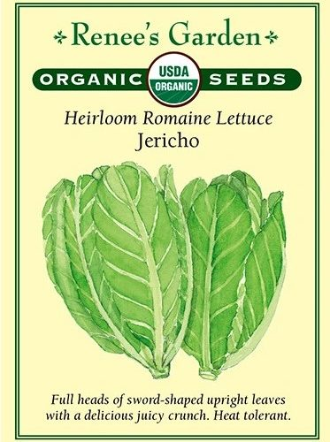 Heirloom Romaine Lettuce Jericho