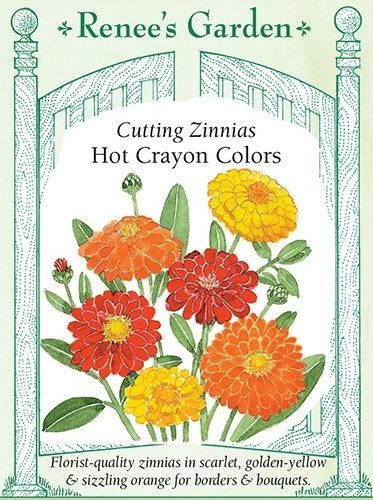 Cutting Zinnias Hot Crayon Colors