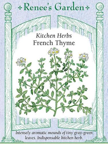 Kitchen Herbs French Thyme