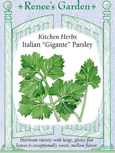 "Kitchen Herbs Italian ""Gigante"" Parsley"