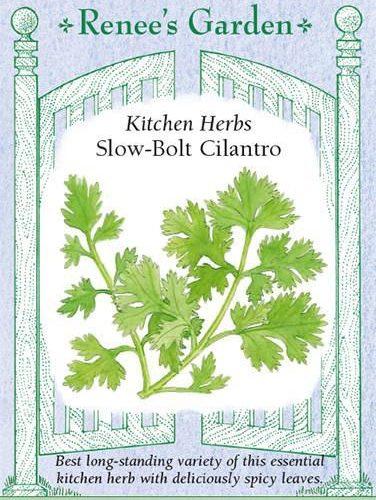 Kitchen Herbs Slow-Bolt Cilantro