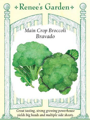 Main Crop Broccoli Bravado Pack