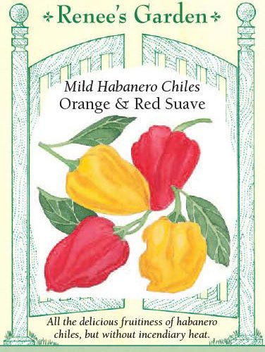 Mild Habanero Chiles Orange & Red Suave