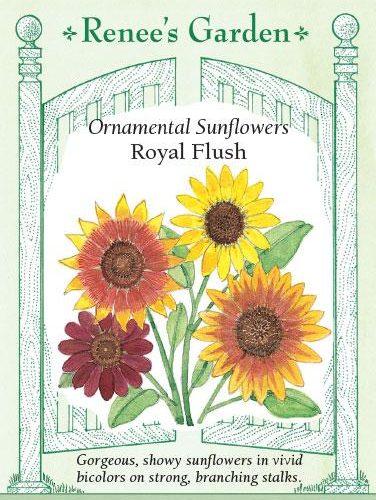 Ornamental Sunflowers Royal Flush