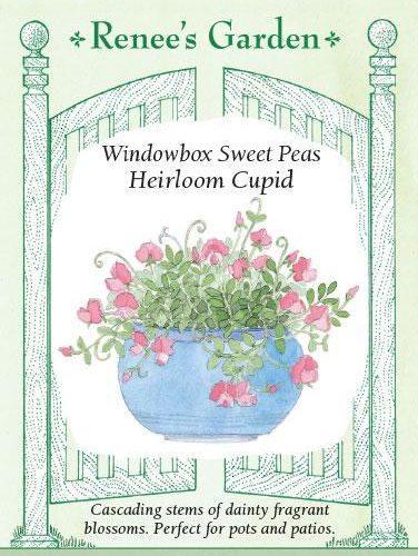 Windowbox Sweet Peas Heirloom Cupid