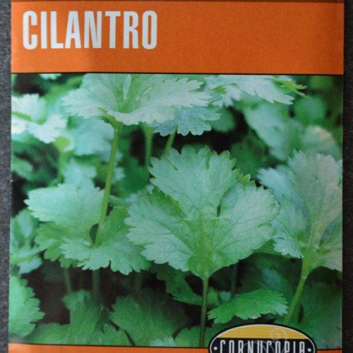 Cilantro Longstanding