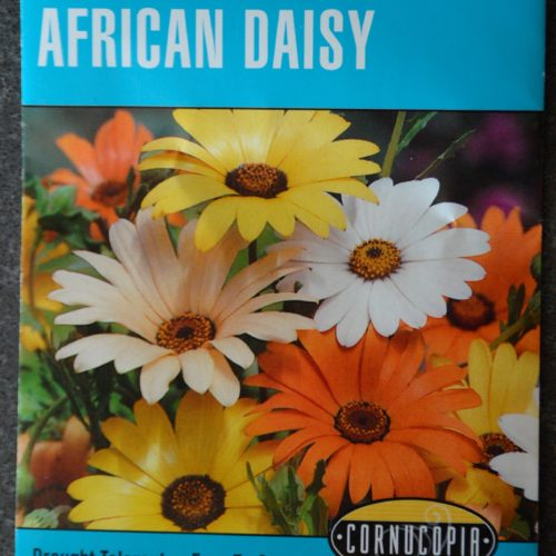 African Daisy Giant Mixed Colors